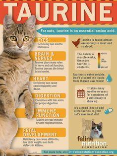 cat health infographic taurine veterinary medicine veterinary nursing student nurse