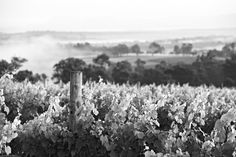 Scarborough Wine Co in the Hunter Valley #wine