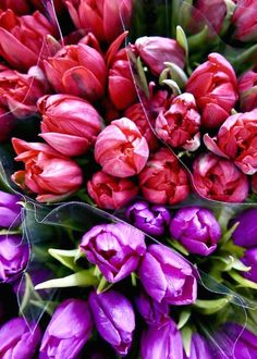 Loving these beautiful pink and purple tulips from Kensington Flower Corner, just near our newest shop in London. Captured by Poppy Loves | Banana Republic