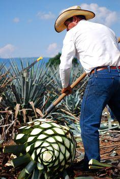 Take a Trip on the Tequila Trail [ MexicanConnexionforTile.com ] #culture #Talavera #Mexican