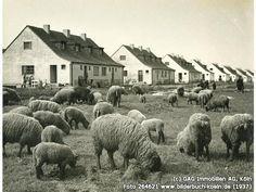 Reiherweg, 50829 Köln - Vogelsang (1937)