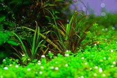 Macro and Micro Nutrients for Aquascape Aquarium