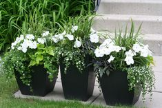 These are my flower pots I put together in early spring.- These are my flower pots I put together in early spring. Love the combination of… These are my flower pots I put together in early spring. Love the combination of green, white and black. Container Flowers, Flower Planters, Container Plants, Container Gardening, Flower Pots, Potted Flowers, Flowers Garden, Black Planters, Outdoor Flowers