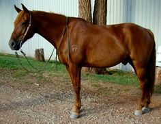 Red - Hearts & Horses