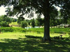 North Carolina winery, Treehouse Vineyards, Inc. Monroe, NC Property Photos