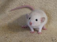 Littlest aww : RATS