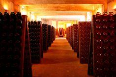VinumMedia #winelover: ¿PERO ES QUE SE PRODUCEN VINOS EN VENEZUELA?