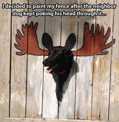 funny animals, dogs, funny stories, funny pictures, funni, moose, paint, fences, dog humor