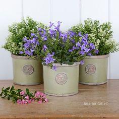Image result for kew gardens herb pots on tray planters kew garden set of three herb pots tray royal botanic gardens grape gr workwithnaturefo