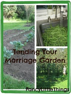 Blog: What seeds am I planting into our marriage? What weeds have been left to sprout up?