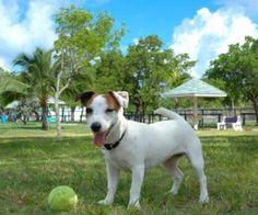 เจ้าตูบเตรียมเฮ กทม. กำลังจะมีสวนสาธารณะสำหรับสุนัขเป็นแห่งแรกในประเทศไทยแล้ว