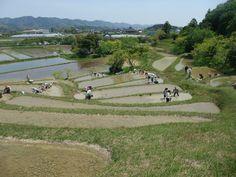 千葉県鴨川市 里山の棚田でお米づくりスクール