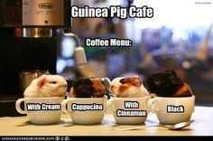 Guinea Pig Cafe