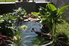 Turtle pond in Louisiana
