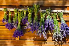 This is a guide about uses for dried lavender. Lavender& lovely scent makes it a sought after perennial flower that, in its dry state, can be used in many ways. Lavender Uses, Growing Lavender, Growing Herbs, Lavender Flowers, Cut Flowers, Dried Flowers, Lavender Fields, Purple Roses, Types Of Christmas Trees