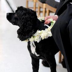 Flower Collar Simple Flower Crown, White Flower Crown, Floral Crown, Black Cocker Spaniel, Pet Rocks, Martha Stewart Weddings, Dog Wedding, Baby Dogs, Real Weddings