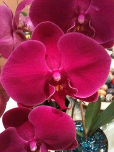 Orchidee <3