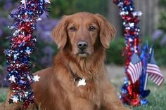 Got dogs?  Prepare for July 4th!