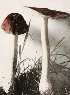 The Magical Mushroom: How a Little Spore Can Save the World by Paul Stamets - Philadelphia Science Festival Signature Program Collages, Science Festival, Mushroom Fungi, Were All Mad Here, Fairy Land, Natural World, Faeries, Mother Nature, Alice In Wonderland