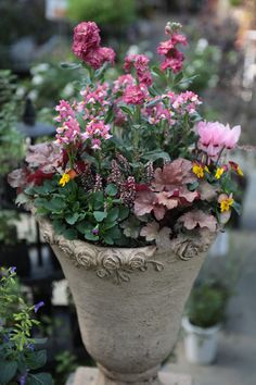 Container Gardening Vegetables, Container Plants, Summer Garden, Winter Garden, Gardening Photography, Small Outdoor Spaces, Pot Plante, Outdoor Flowers, Flower Planters