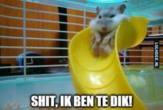 Hamsters are amazing-we all know that.But some hamsters are so cute you can't stand even looking at them.You just want to squeeze them until they just explode . Haha Funny, Funny Cute, Hilarious, Funny Memes, Funny Stuff, Silly Jokes, Fat Memes, Super Funny, Memes Humor