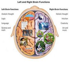 Exercise your creativity – Mind Mapping   Brain and Brain diagram