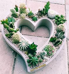 How to Create Modern Cement PlantersYou can find Cement planters and more on our website.How to Create Modern Cement Planters Cement Art, Concrete Crafts, Concrete Planters, Ceramic Planters, Modern Planters, Concrete Garden, Cactus Flower, Cactus Plants, Flower Pots