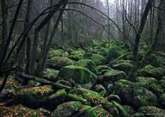 12 Photos That Prove The Bavarian & Bohemian Forests Are Straight Out Of A Fairy Tale