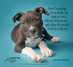 End Pit Bull discrimination...they're the same as any other dog and have the same love and devotion to give.