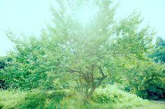 リトル・フォレスト / Little Forest (Film 2014)