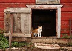 farm cat - Google Search