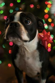 Adorable Christmas gift...