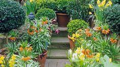 Tulpen bringen den Frühling in die Terrassengestaltung mit Pflanzen