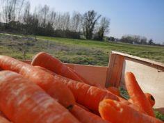 Les carottes de Monsieur Paul, les vrais!