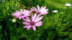 """Flores de """"La rotonda"""" en Guadalajara"""