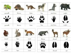 Empreintes animaux de la forêt animals silly animals animal mashups animal printables majestic animals animals and pets funny hilarious animal Animal Activities, Activities For Kids, Animal Footprints, Fun Facts About Animals, Animal Tracks, Forest School, Montessori Materials, Preschool Science, Animal Projects