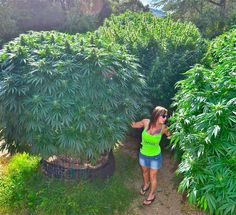Meet the Woman Publicly Known For Professional, Potent Marijuana Seed Breeding - Big Buds Magazine