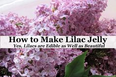 easy Lilac Jelly recipe that can be adapted for other edible flowers. Turn an abundance of lilac blossoms into a unique edible gift or homemade treat. List Of Edible Flowers, Lilac Blossom, Piercings, Jelly Recipes, Drink Recipes, Dessert Recipes, Vegetable Drinks, Vegetable Gardening, Container Gardening