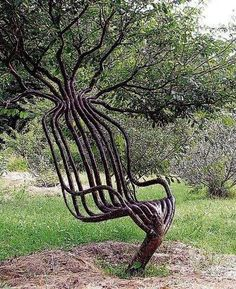2 A tree chair