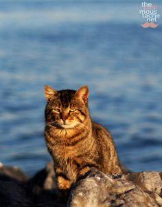 #Istanbul #cat