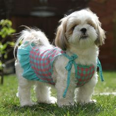 Google Image Result for http://www.baxterboo.com/images/products/large/checker-dog-dress-gooby-pink-1.jpg