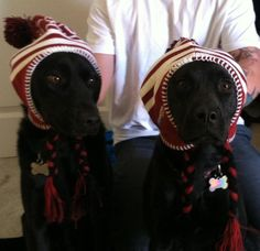 These dogs love the Phoenix #Coyotes. Sporting their favorite winter hats!