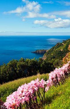 Colors of the Azores islands, São Miguel Island | Azores, Portugal