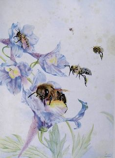 The Children's Life of the Bee: Chapter 1  illustrated by Edward J. Detmold