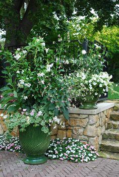 white flowers...great for moonlight gardens