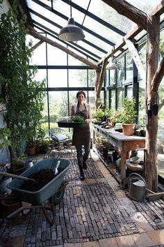 serre planten