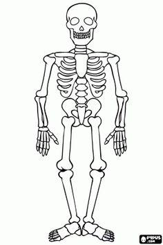 Dibujos de esqueleto para colorear en Halloween