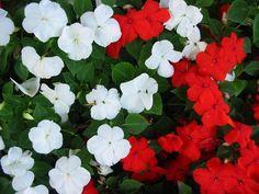 Flori care cresc la umbra in gradina Irrigation, Parrot Toys, Shade Plants, Blossom Flower, Hanging Planters, Geraniums, Spring Flowers, All The Colors, Garden Plants