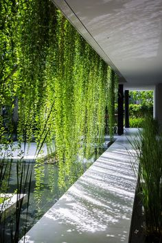 A walkway through hanging gardens.