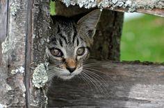 DGJ_5814 - Farm Cat